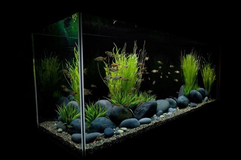 Оформление аквариума дизайн аквариума