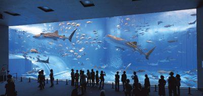 akvarium-onlayn