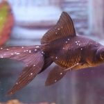 Заболевания и лечение рыб