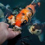 Чем лучше всего кормить рыб