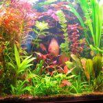 Роль растений в аквариуме